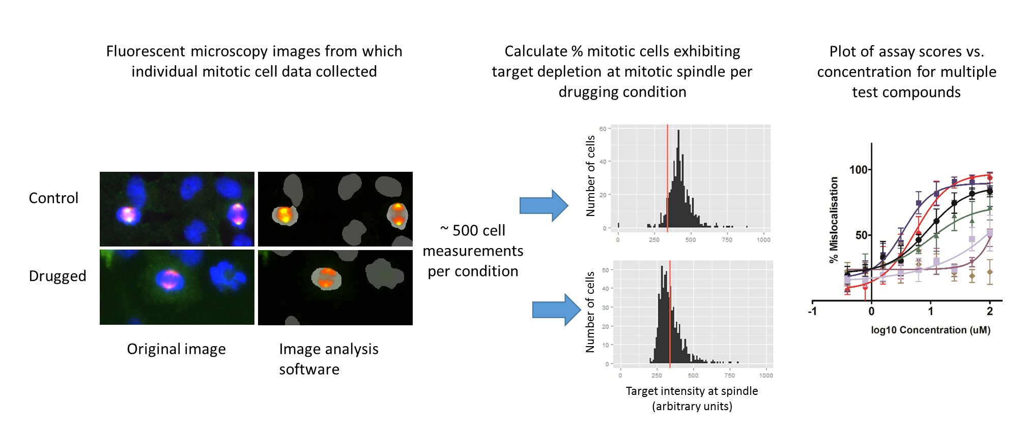 High content assay for target depletion from the mitotic spindle